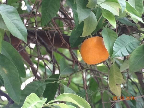 Просто апельсин.