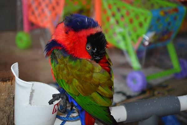 Злой птиц, который клюнул меня