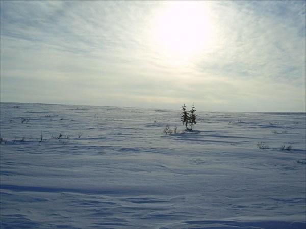 Типичный пейзаж тунры