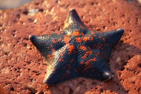 Звёзды Приморья