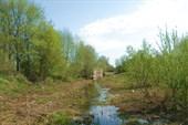 Заросший участок канала у дер. Нижняя Шальдиха