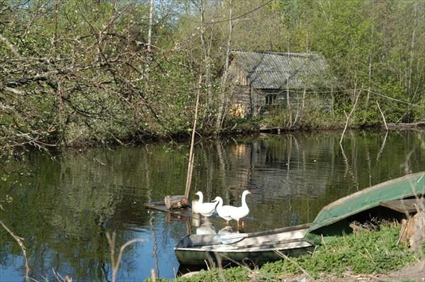 Дубно. Староладожский канал