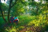 Раннее утро в пригороде Сайгона