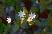 Неизвестные мне цветы
