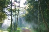 Дым в лесу.