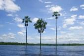 Эти три пальмы - визитная карточка лагуны, как и водопады