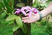 орхидеи растут на пальмах