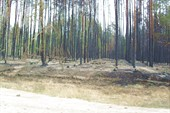 Это около Воронежа.