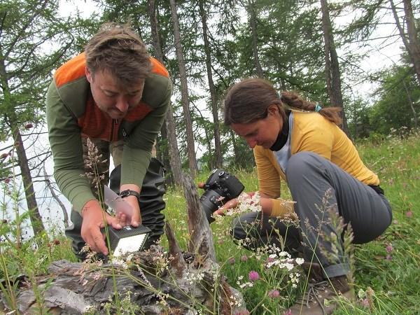 Гриша, Джулия и личная жизнь муравьев