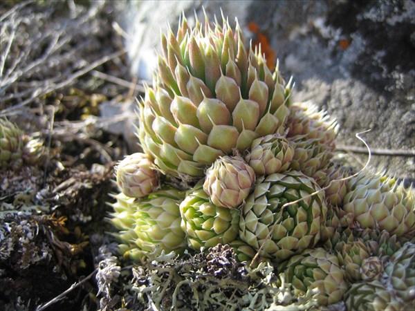 Интересное растение вблизи