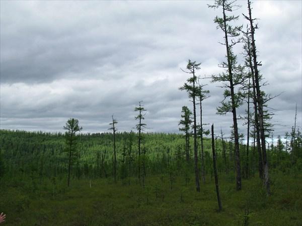 Марь - болото с мощным покровом сфагновых мхов