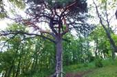 Местное обзорное дерево