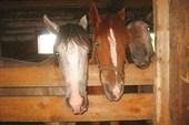 наши коняшки