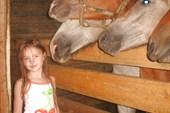наши коняшки и моя Сашка