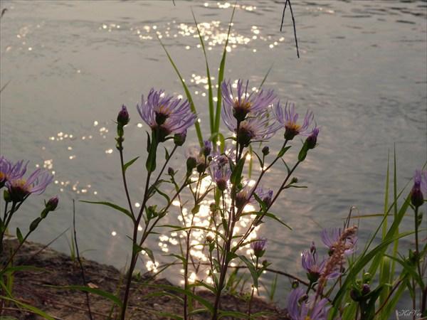Цветы и солнце