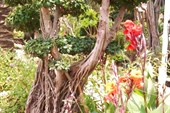 Косички из корней
