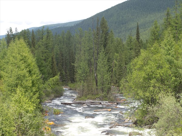 Таежная река
