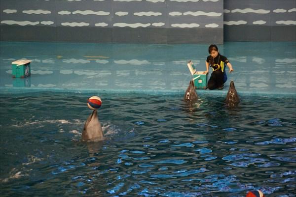 Далянь. Дельфинарий