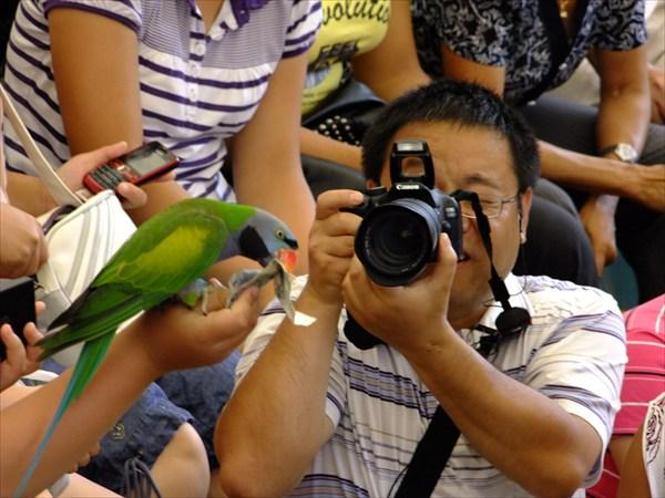 Даляньский парк птиц. Шоу попугаев