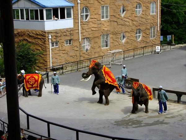 Даляньский зоопарк. Шоу слонов