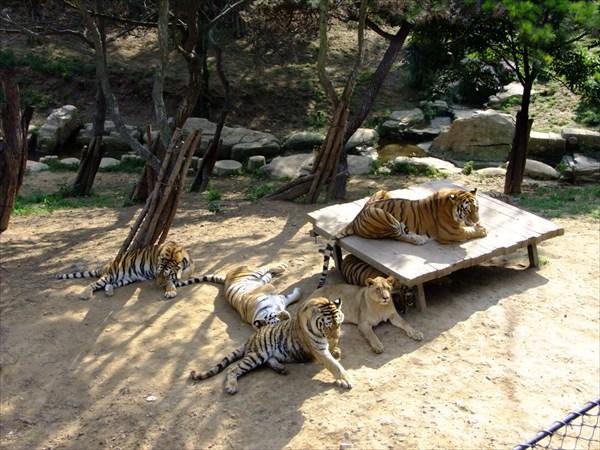 Даляньский зоопарк