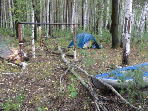 Лагерь в березняке.