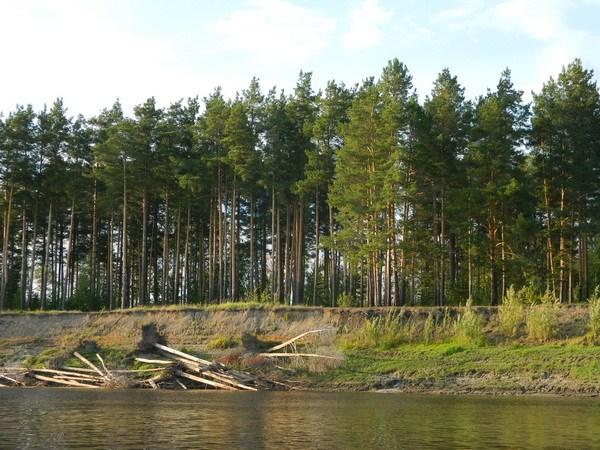Грибной лес.