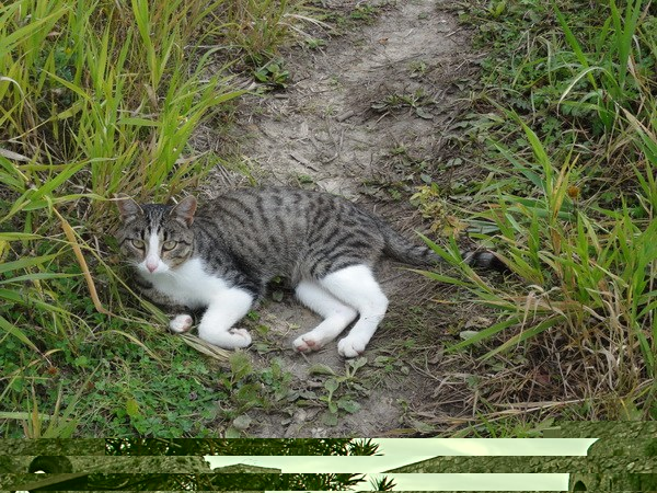 Сторожевая кошка.