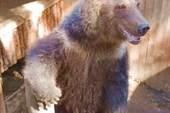 Еще медвед