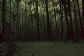 Ночью в лесу