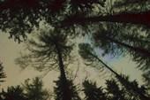 Красота деревьев