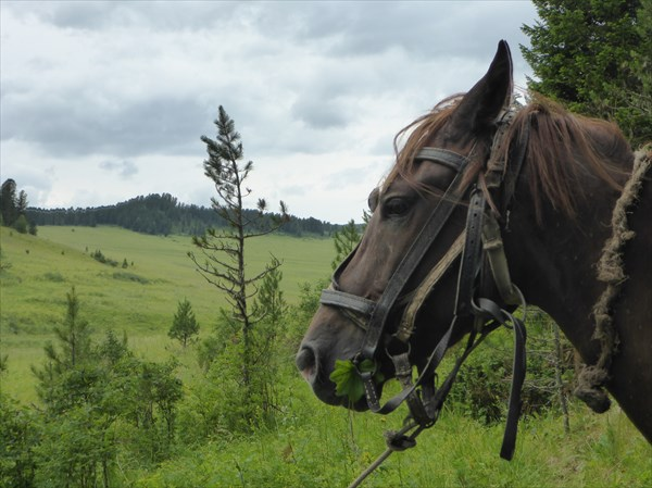 Конь конюха