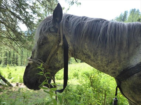 Беложопый... он же Ветерок, он же Ветер Северный (мой конь)