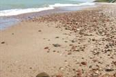 море вдоль Куршской косы