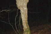 забавное дерево