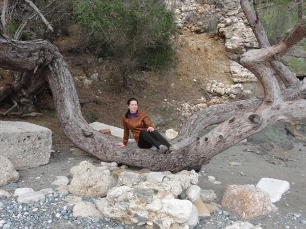 Дерево для фотосессий