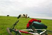 Кадр `Велосипед и Корова`