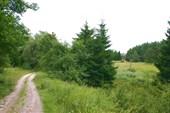 Лесная дорога в районе Виштынецкого озера