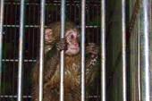 свободу обезьянам !