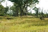 Африка, сафари IMG_0093