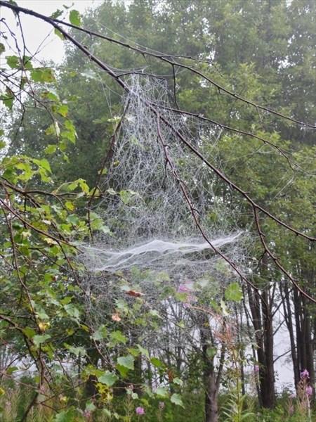 Купол паутины.