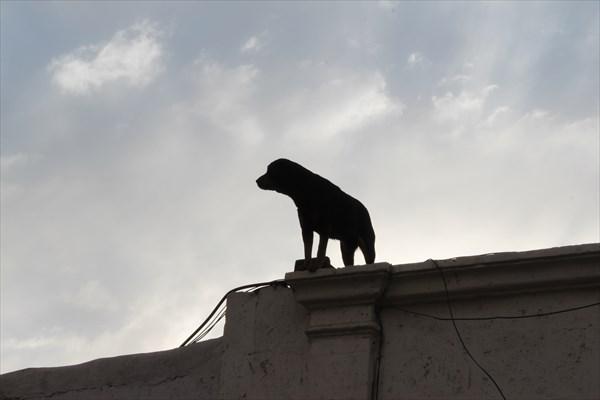 Собачка на доме