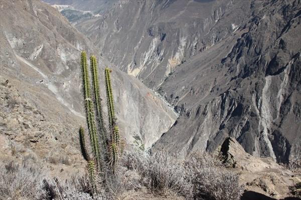 Кактус и каньон