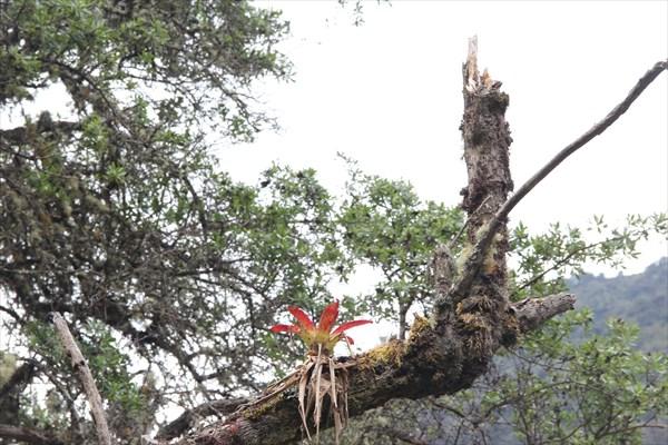 Цветы в джунглях