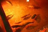 018-Рыбы