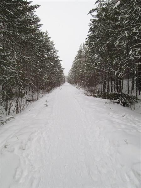 Старая ветка железной дороги под лыжнёй