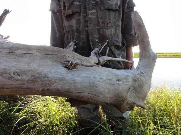 Бревно-носорог.