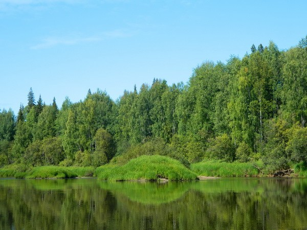 По берегам лес.