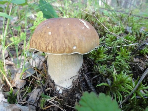 И гриб вырос рядом с избушкой.