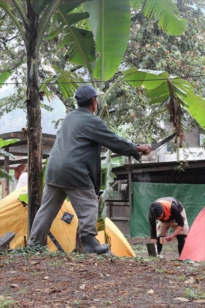 Работник срезает мачете старые листья пальмы